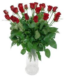 Ağrı çiçekçi telefonları  11 adet kimizi gülün ihtisami cam yada mika vazo modeli