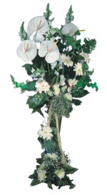 Ağrı çiçek mağazası , çiçekçi adresleri  antoryumlarin büyüsü özel