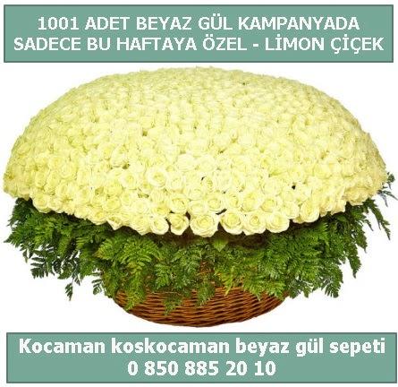 1001 adet beyaz gül sepeti özel kampanyada  Ağrı çiçek gönderme sitemiz güvenlidir