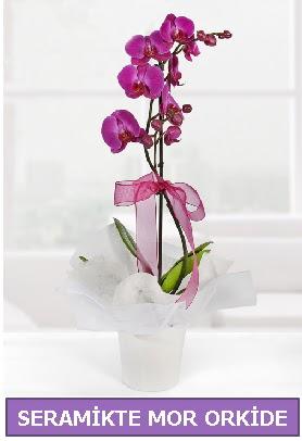 Seramik içerisinde birinci kalite tek dallı mor orkide  Ağrı İnternetten çiçek siparişi