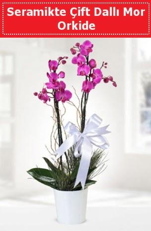 Seramikte Çift Dallı Mor Orkide  Ağrı anneler günü çiçek yolla