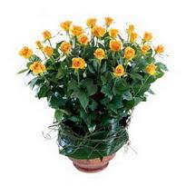 Ağrı cicekciler , cicek siparisi  10 adet sari gül tanzim cam yada mika vazoda çiçek