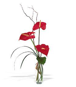 Ağrı çiçek siparişi sitesi  cam yada mika Vazoda 3 adet  antoryum