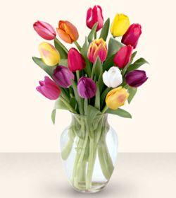 Ağrı çiçekçiler  13 adet cam yada mika vazoda laleler