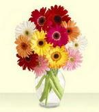 Ağrı çiçek yolla , çiçek gönder , çiçekçi   cam yada mika vazoda 15 özel gerbera
