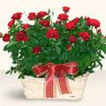Ağrı İnternetten çiçek siparişi  11 adet kirmizi gül sepette