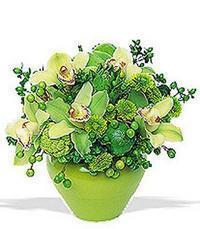 cam yada mika vazoda 5 adet orkide   Ağrı online çiçekçi , çiçek siparişi