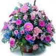 karisik mevsim kir çiçekleri  Ağrı çiçek gönderme sitemiz güvenlidir