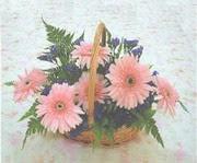 gerbera çiçeklerinde sepet   Ağrı çiçek yolla