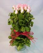 13 adet pembe gül silindirde   Ağrı çiçek yolla