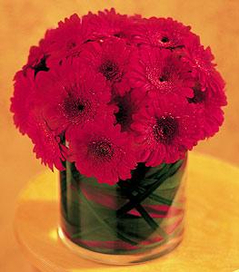 Ağrı ucuz çiçek gönder  23 adet gerbera çiçegi sade ve sik cam içerisinde