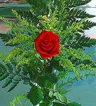 1 adet kirmizi gül buketi   Ağrı çiçek siparişi vermek