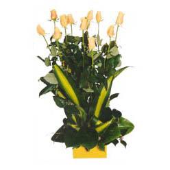 12 adet beyaz gül aranjmani  Ağrı kaliteli taze ve ucuz çiçekler