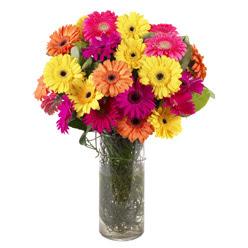 KARISIK GERBERALARDAN CAM VAZO TANZIMI  Ağrı güvenli kaliteli hızlı çiçek