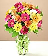 Ağrı çiçek online çiçek siparişi  17 adet karisik gerbera