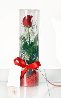 Ağrı çiçek yolla  Silindir vazoda tek kirmizi gül