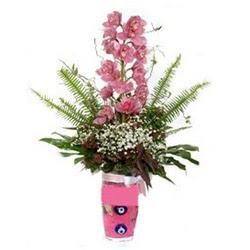 Ağrı hediye çiçek yolla  cam yada mika vazo içerisinde tek dal orkide çiçegi