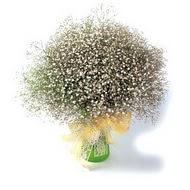 Ağrı çiçek mağazası , çiçekçi adresleri  cam yada mika vazo içerisinde cipsofilya demeti