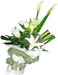 Ağrı güvenli kaliteli hızlı çiçek  3 dal kazablanka çiçegi ve yesillikler