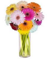 Ağrı internetten çiçek siparişi  Farkli renklerde 15 adet gerbera çiçegi