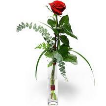 Ağrı 14 şubat sevgililer günü çiçek  Sana deger veriyorum bir adet gül cam yada mika vazoda