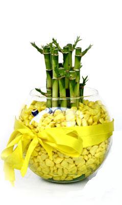 cam fanus içerisinde bambo  Ağrı internetten çiçek satışı