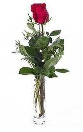 Vazo içerisinde 1 adet kirmizi gül  Ağrı cicekciler , cicek siparisi