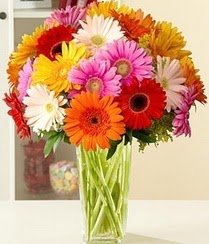 Ağrı çiçek servisi , çiçekçi adresleri  15 adet gerbera çiçek vazosu