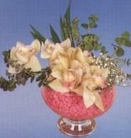 Ağrı çiçek mağazası , çiçekçi adresleri  Dal orkide kalite bir hediye