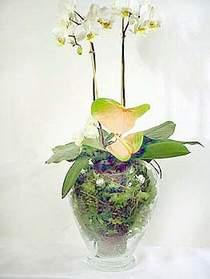 Ağrı çiçek satışı  Cam yada mika vazoda özel orkideler