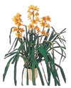 Ağrı çiçekçiler  Orchiede ithal büyük boy saksi