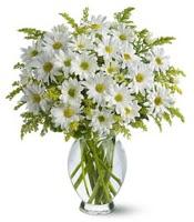 Vazo içerisinde beyaz krizantem çiçekleri  Ağrı çiçekçi mağazası
