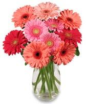 vazo içerisinde 13 adet gerbera çiçeği  Ağrı çiçek siparişi sitesi