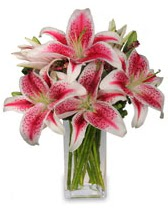 Vazo içerisinde 5 dal kazablanka çiçeği  Ağrı cicekciler , cicek siparisi