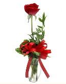 vazo içerisinde 1 adet kırmızı gül  Ağrı çiçekçi telefonları