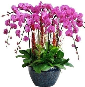 9 dallı mor orkide  Ağrı 14 şubat sevgililer günü çiçek