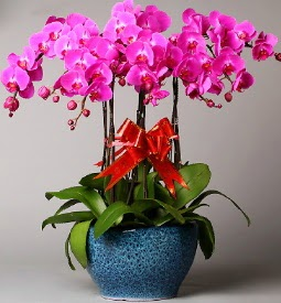 7 dallı mor orkide  Ağrı çiçek online çiçek siparişi