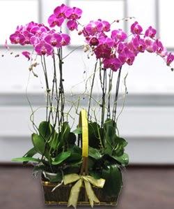 4 dallı mor orkide  Ağrı güvenli kaliteli hızlı çiçek