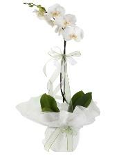 1 dal beyaz orkide çiçeği  Ağrı çiçek siparişi vermek