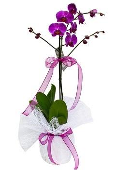 Tek dallı mor orkide  Ağrı çiçekçi telefonları