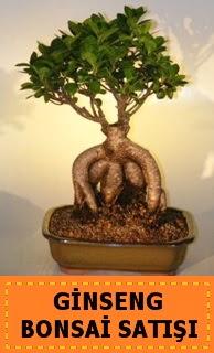 Ginseng bonsai satışı japon ağacı  Ağrı cicek , cicekci