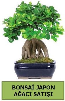 Bonsai japon ağacı satışı  Ağrı çiçek satışı