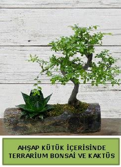Ahşap kütük bonsai kaktüs teraryum  Ağrı internetten çiçek siparişi