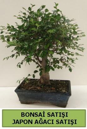 Minyatür bonsai japon ağacı satışı  Ağrı çiçek gönderme sitemiz güvenlidir