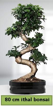 80 cm özel saksıda bonsai bitkisi  Ağrı çiçekçi telefonları