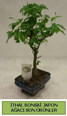İthal bonsai japon ağacı bitkisi  Ağrı hediye sevgilime hediye çiçek
