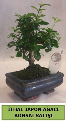 İthal japon ağacı bonsai bitkisi satışı  Ağrı çiçekçi telefonları