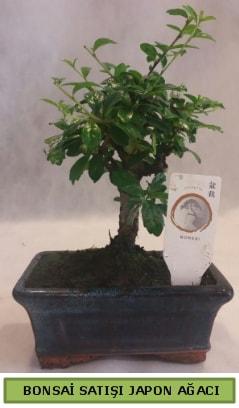 Minyatür bonsai ağacı satışı  Ağrı çiçek gönderme