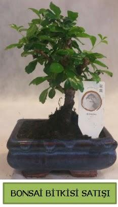 Bonsai ithal görsel minyatür japon ağacı  Ağrı ucuz çiçek gönder