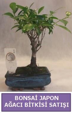 İthal Bonsai japon ağacı bitkisi satışı  Ağrı İnternetten çiçek siparişi